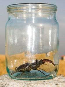 la scienza studia gli insetti