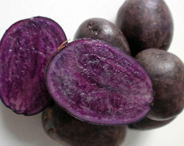 patate viola vitelotte