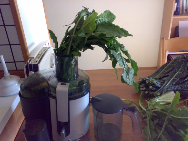 spremitura verdure a foglia verde catalogna